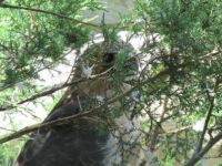 Howell Nature center, Peek a boo!