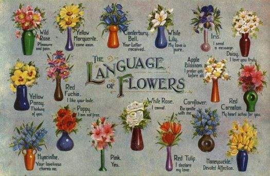 Flower Meanings: The Language of Flowers