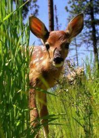 Zvědavé mládě