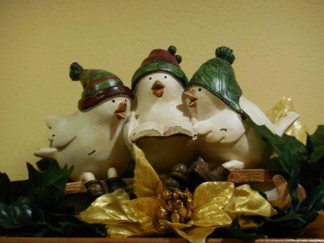 Singing Snow Birds!