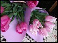 ~Lovely Tulips~