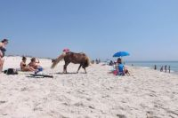 A day at Assateague