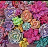 Pretty succulents.