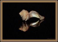 Mirrored shell