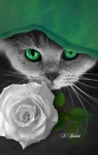 Chat aux yeux vert.