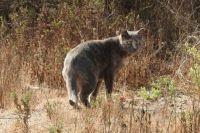 Cat at the Grand Avenue Bridge trail