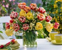 Bouquet-of-different-Tulipa-tulip-and-Cytisus-broom