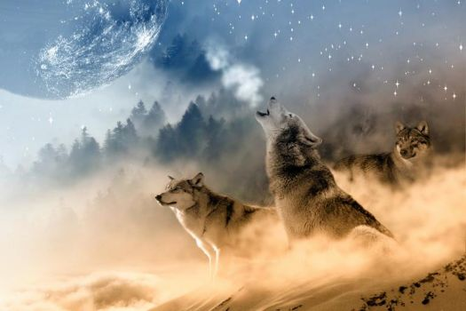 Wolves With The Moon