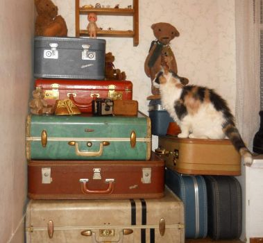 Cutie cat and the suitcases