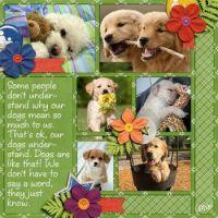 📷  Photos Cutie Pie Dogs & Puppies #1