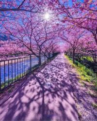 Beauty of Spring