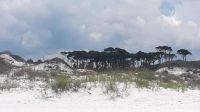Trees on the edge of the dunes