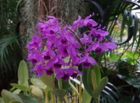 From the Botanical Garden in St. Paul . . Orchids