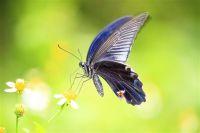 Een vlinder op een bloem.