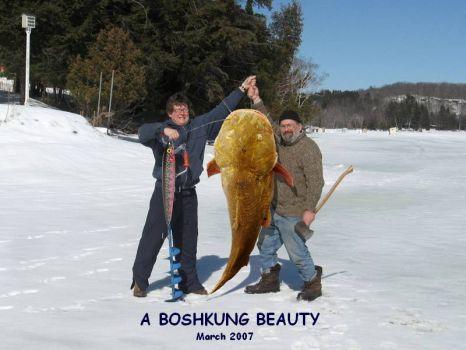 boshkung beauty