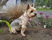 Daisy Mae in the garden