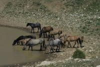 2012  BREAK TIME AT THE PRYOR MOUNTAIN WATERHOLE