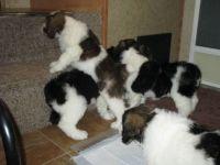 PON puppies
