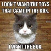 Forget the Toys...