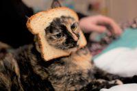 Cat Breading - meme