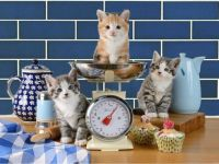 Kitty Kitchen