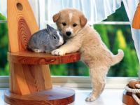 Puppy and Bunny – Just cute
