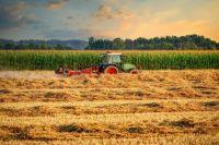 Late Summer Harvest