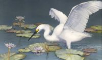 In Search of... (Snowy Egret)