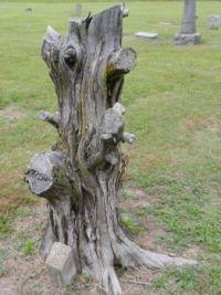 Cedar Stump 2