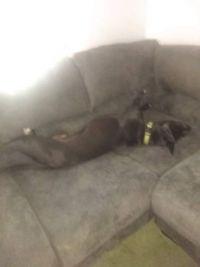 Pobs Sleeping weird position
