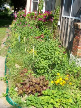 perennial beds 2008 - side of house