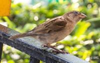 A Sparrow Posed Too
