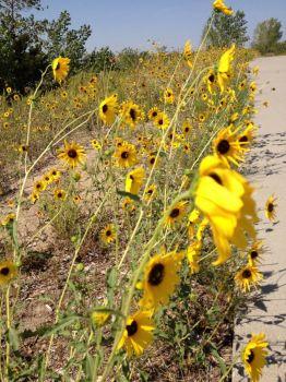 Kearney Flowers