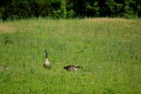 Visitors in my field.