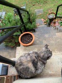Lola rain's edge