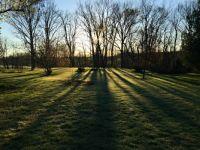 Sunrise through the trees3264x2448