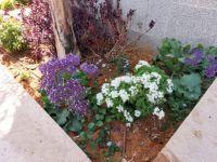 building flower planting