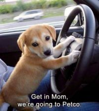 Son! when, did you start driving?