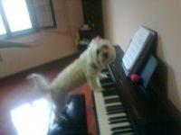 luna 2 pianista