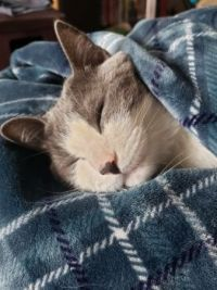 Nap time ;)