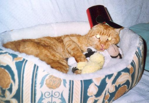 Garfield on his 20th birthday March 2006