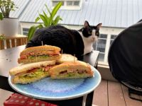 BLT Sandwiches for breakfast, with a green-eyed cat in attendance