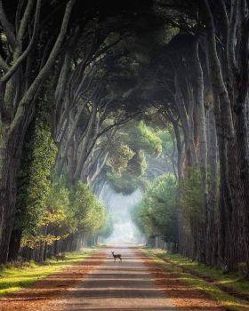 San Rossore National Park