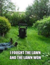That darn lawn...