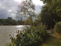 Nyewood Ponds, Rogate, Sussex 2