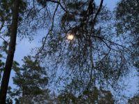 Full moon at Salt Springs