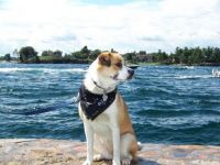Koda on the St Lawrence Seaway