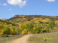 Beautiful Aspens - CO