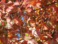 Fall Leaves in my Garden