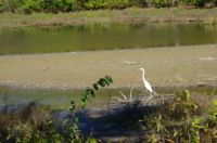 fall pictures egret